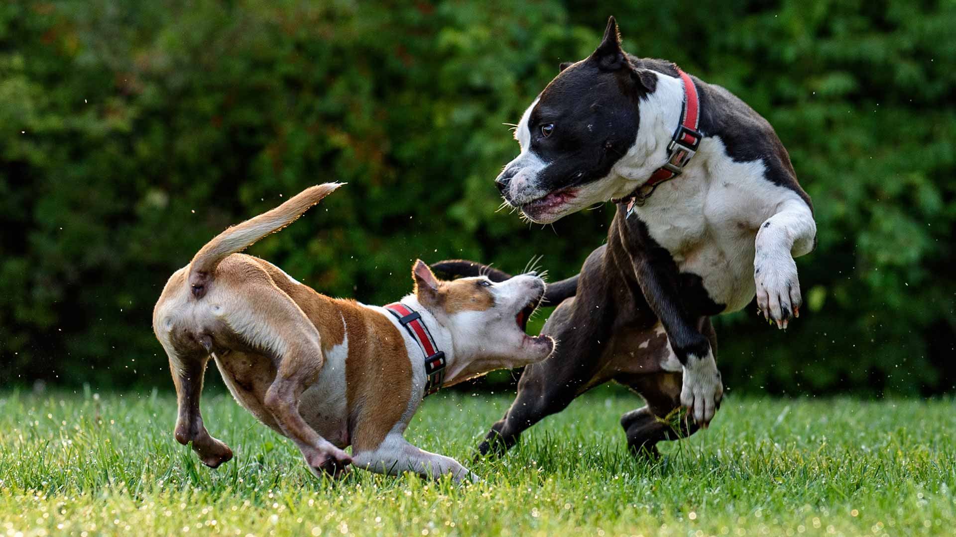 Read more about the article Вашу собаку покусали – что делать?