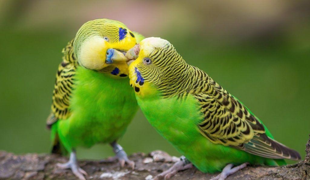 You are currently viewing Если Вы решили завести попугая