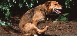 Read more about the article Почему собака ездит на попе