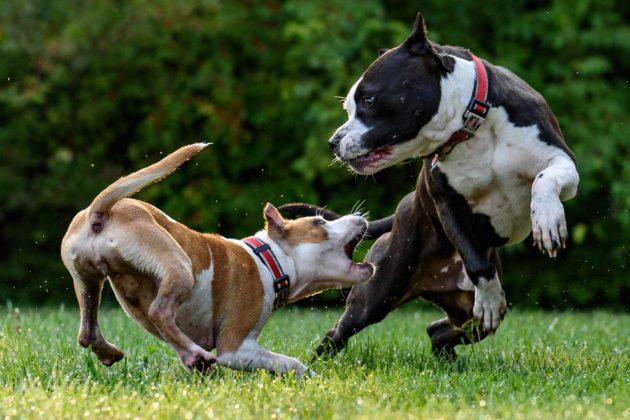 Вашу собаку покусали – что делать?