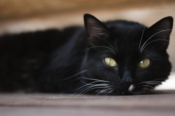 cat-2432995_1920